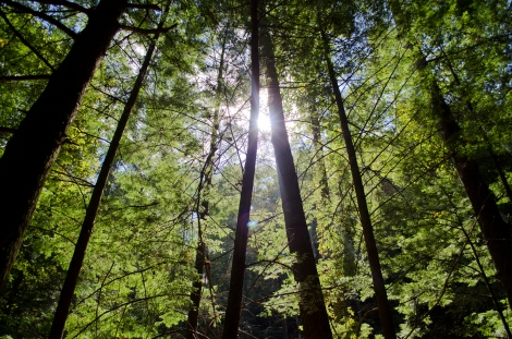 The sun shines through the trees in the Daniel Boone National Forest, KY