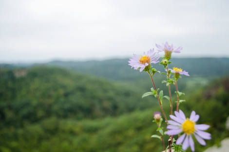 A flower set against the hills of Eastern Kentucky.