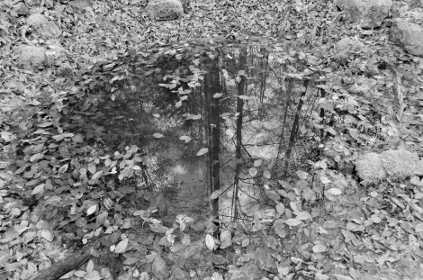 The Daniel Boone National Forest seen in a small reflecting pool.